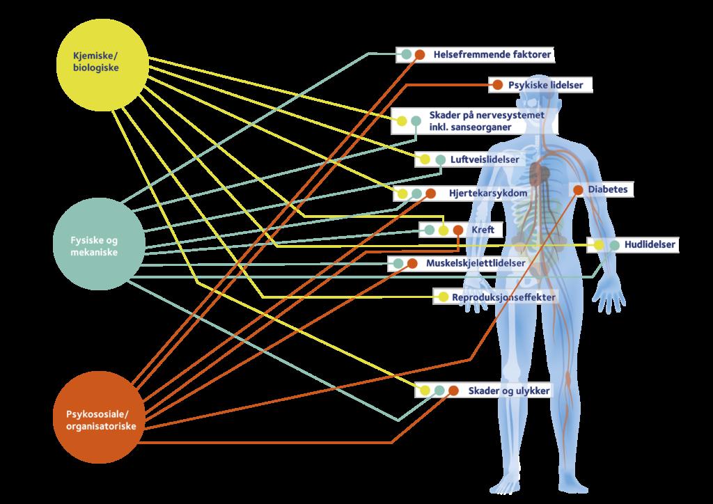 bilde av vitenskapelig etablerte sammenhenger mellom arbeidsmiljøeksponeringer og potensielle helseeffekter.